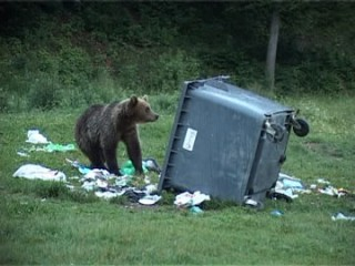 ursi-pe-valea-cerbului