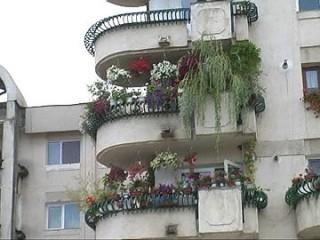balconul-inflorit